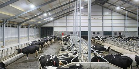 California Dairy Farms Retrofit