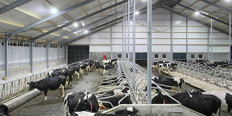 California Dairy Farms Retrofit